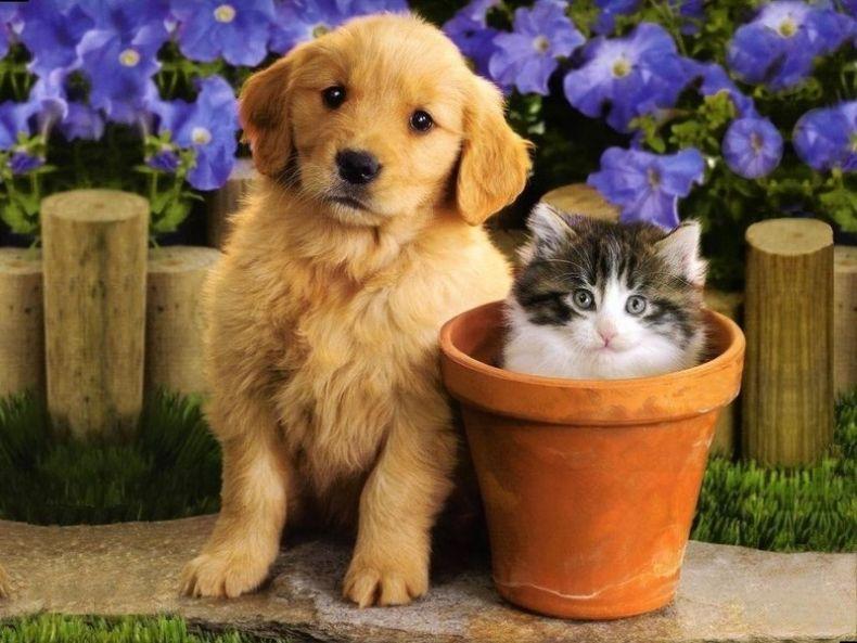Картинки с собачками и котиками