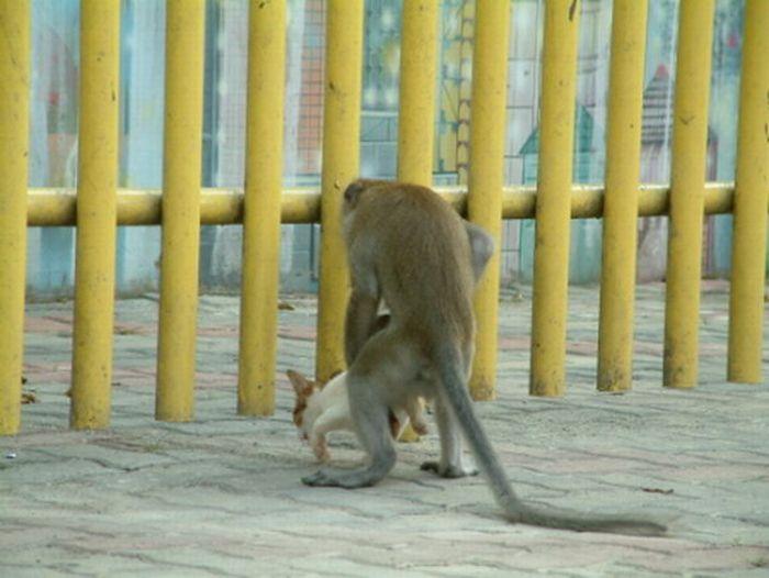 Насилие, , коты, обезьяны, животные.