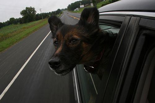 Собаки и машины (16 Фото)