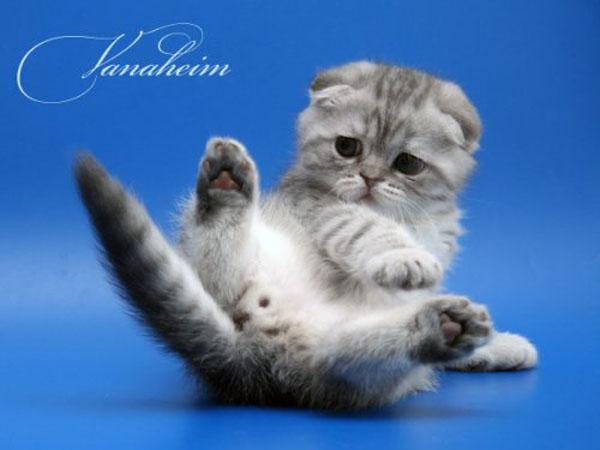 Картинки котята смешные с надписью, надписи картинках