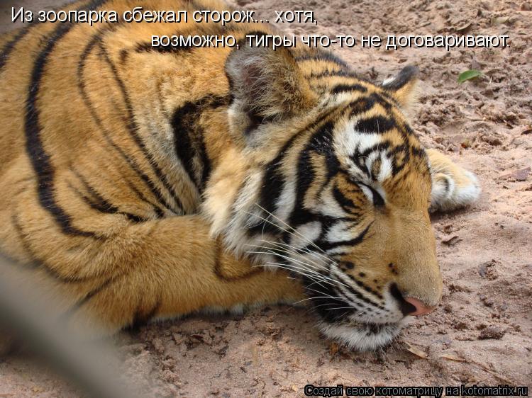 Картинки с тигром с надписей