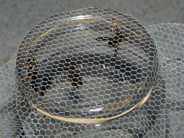Мухолет так и не полетел (12 фото)