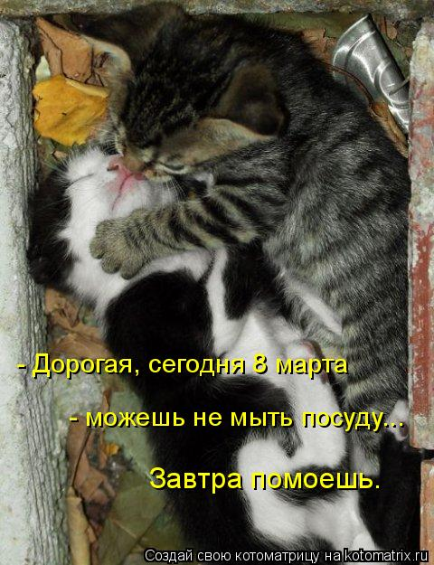 Небольшая подборка 8-мартовских котоматриц (28 фото)