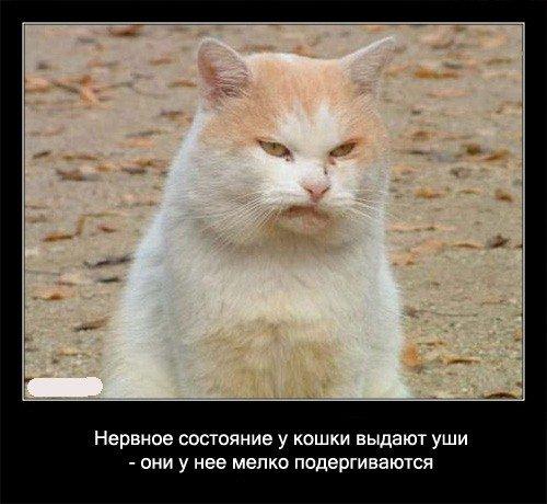 Забавные факты про кошек 56 картинок