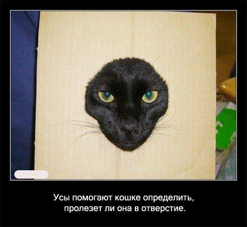 Забавные факты про кошек (56 картинок)