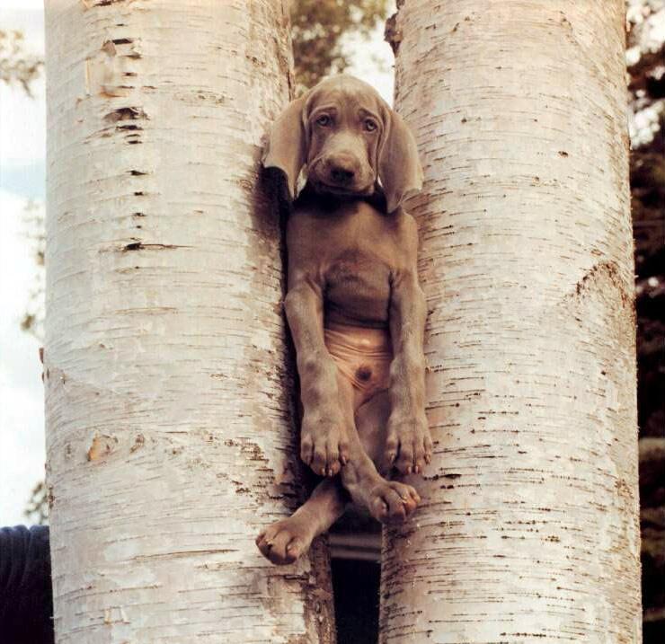 Собаки (30 Фото)