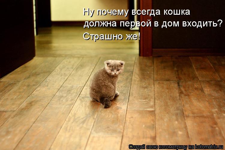 http://de.trinixy.ru/pics4/20090319/kotomatrix_01.jpg