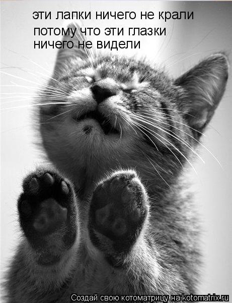 http://de.trinixy.ru/pics4/20090319/kotomatrix_02.jpg