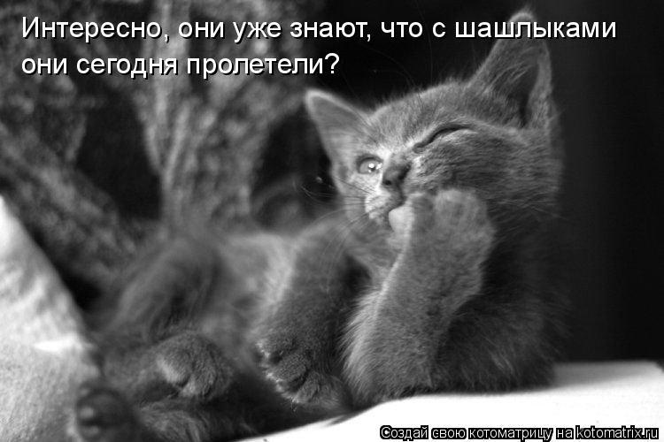 http://de.trinixy.ru/pics4/20090319/kotomatrix_04.jpg