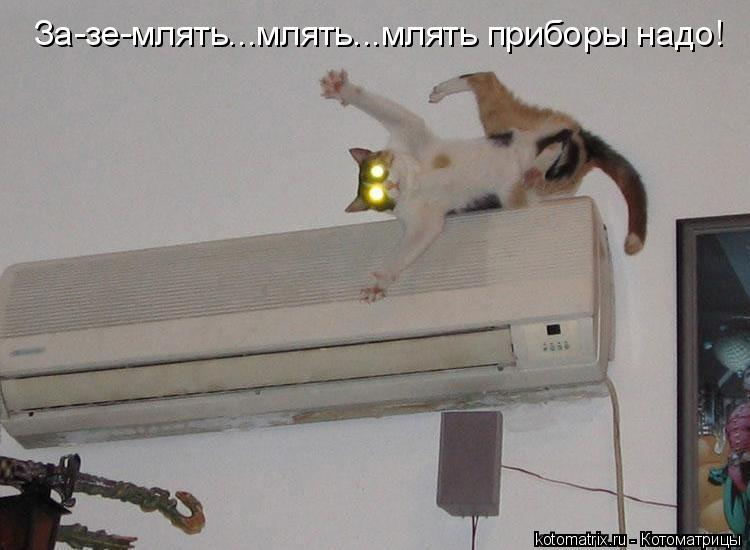 http://de.trinixy.ru/pics4/20090319/kotomatrix_05.jpg