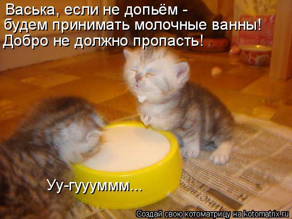 http://de.trinixy.ru/pics4/20090319/kotomatrix_11.jpg