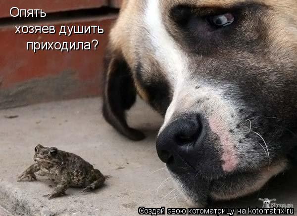 http://de.trinixy.ru/pics4/20090319/kotomatrix_14.jpg