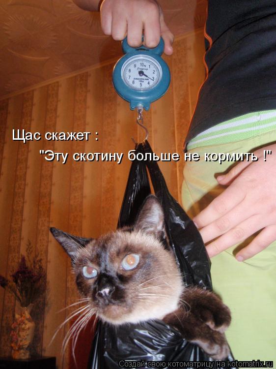 http://de.trinixy.ru/pics4/20090319/kotomatrix_21.jpg