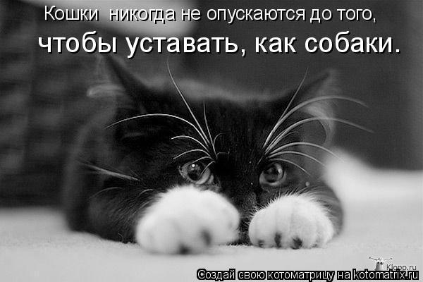 http://de.trinixy.ru/pics4/20090319/kotomatrix_23.jpg