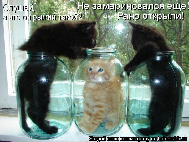 http://de.trinixy.ru/pics4/20090319/kotomatrix_27.jpg