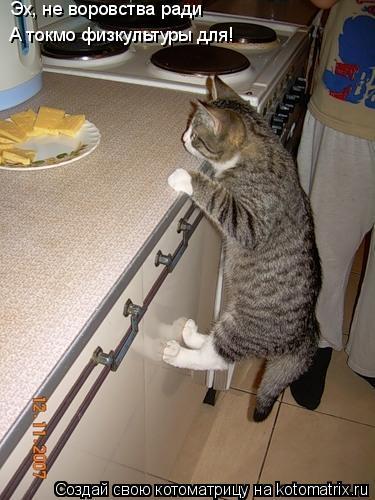 ...кошки абиссинские, черные кошки и кот рыболов фото.