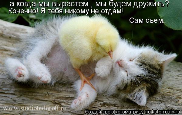 http://de.trinixy.ru/pics4/20090319/kotomatrix_38.jpg