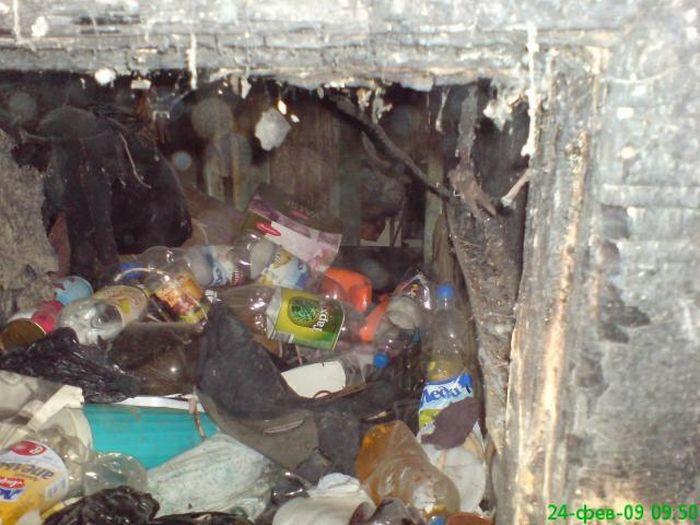 Самая грязная квартира (5 фото)