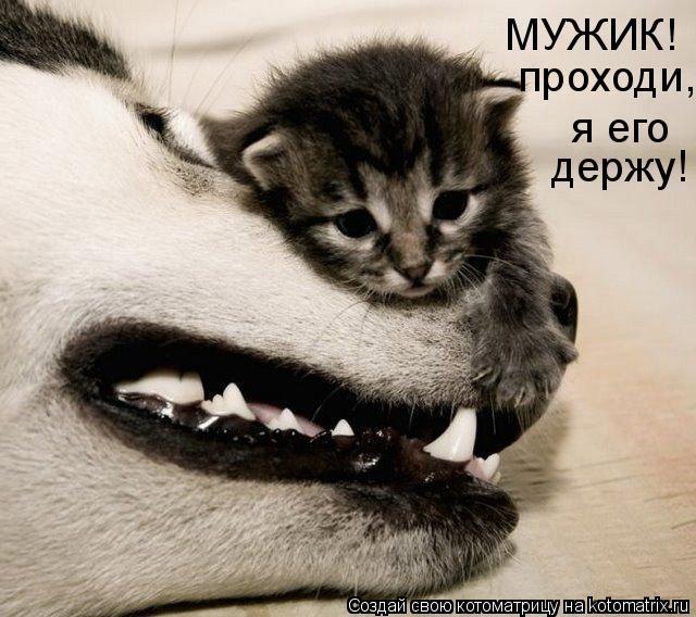 http://de.trinixy.ru/pics4/20090327/kotomatrix_01.jpg