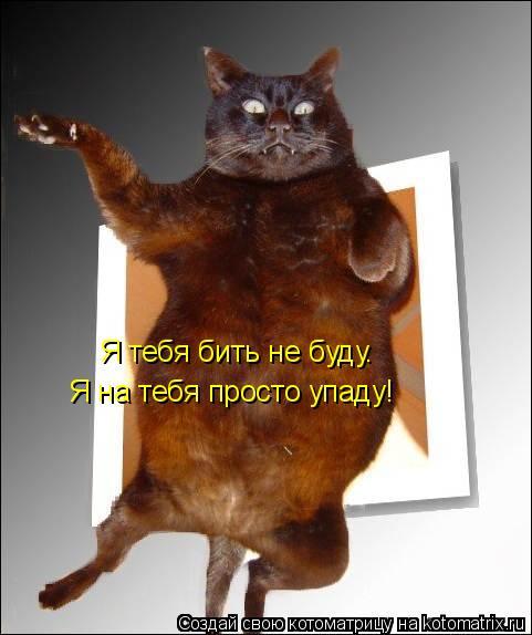 http://de.trinixy.ru/pics4/20090327/kotomatrix_04.jpg