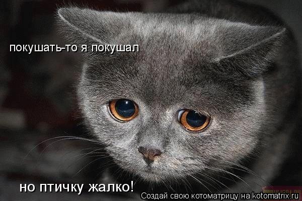 http://de.trinixy.ru/pics4/20090327/kotomatrix_06.jpg