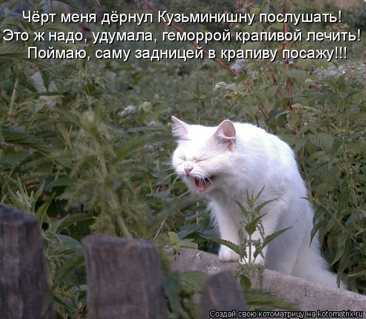 http://de.trinixy.ru/pics4/20090327/kotomatrix_12.jpg