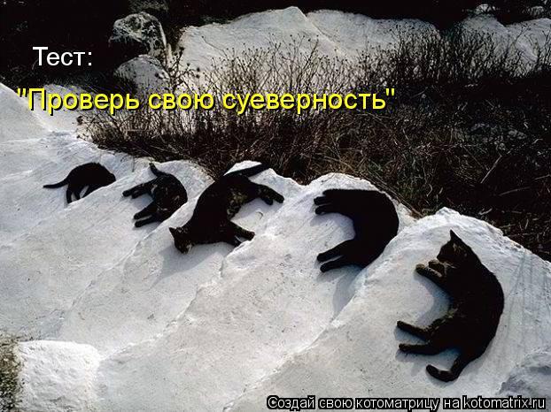 http://de.trinixy.ru/pics4/20090327/kotomatrix_19.jpg
