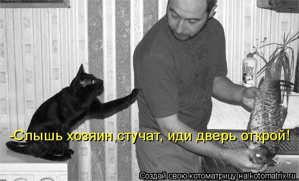 http://de.trinixy.ru/pics4/20090327/kotomatrix_22.jpg