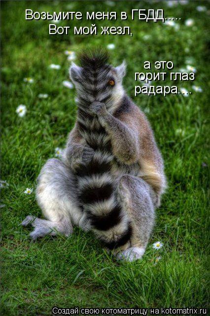 http://de.trinixy.ru/pics4/20090327/kotomatrix_23.jpg