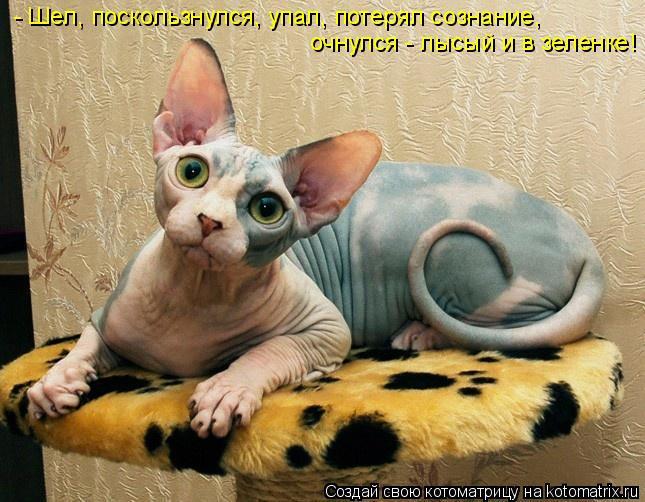 Питомник Канадских Сфинксов AprioriNaked предлагает абсолютно голеньких котят