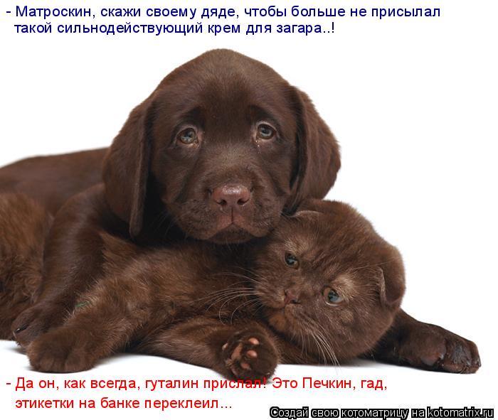 http://de.trinixy.ru/pics4/20090327/kotomatrix_48.jpg