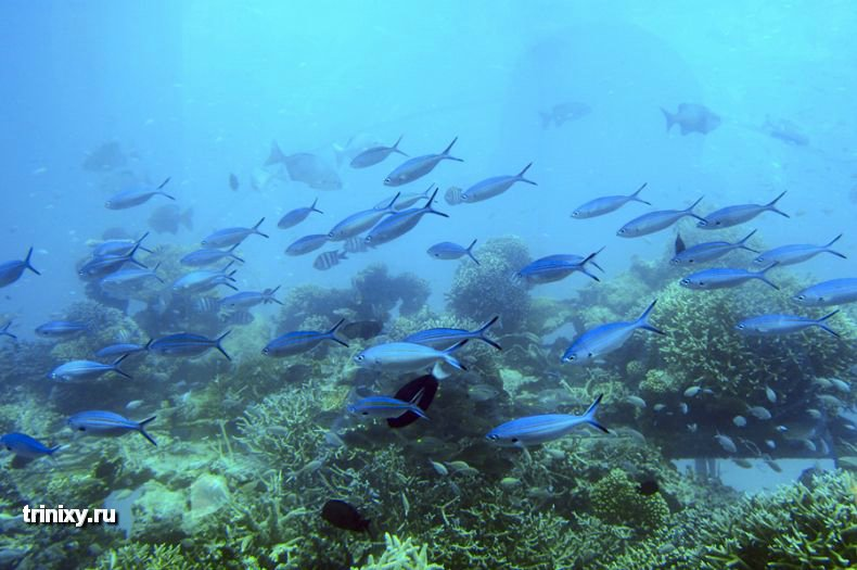 Подводный ресторан на Мальдивах (28 фото)