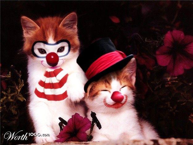Забавная фотожаба. Животные-клоуны (43 картинки)