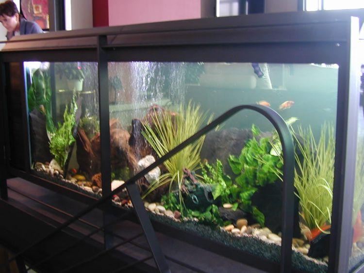 Очень красивые аквариумы (50 фото)