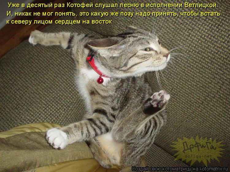 Лучшие котоматрицы прошлой недели (50 фото)