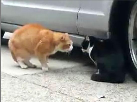 Разговор котов (2.0 мб)