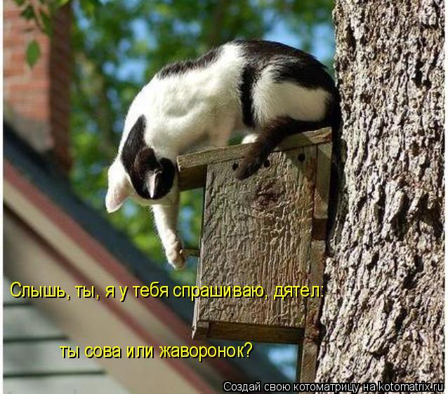 100 лучших котоматриц двух последних недель (100 фото)