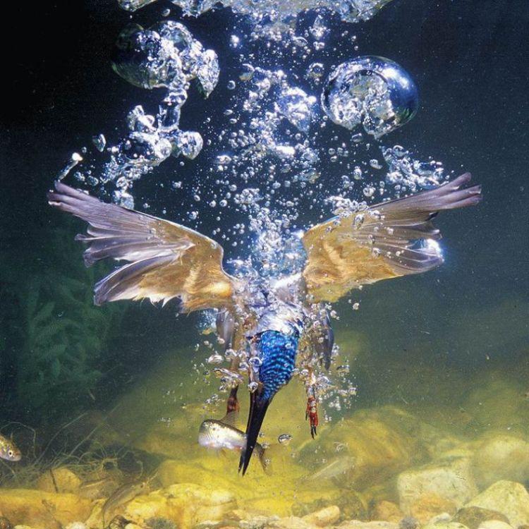 Птицы на охоте (23 фото)