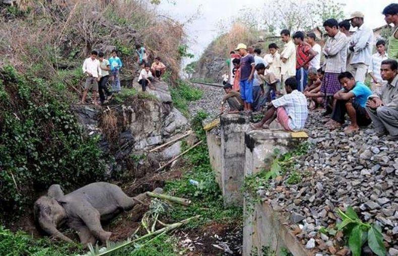 Слоненка сбил поезд (6 фото) .