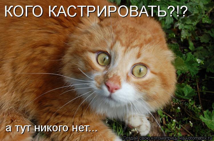 http://de.trinixy.ru/pics4/20090430/kotomatrix_02.jpg