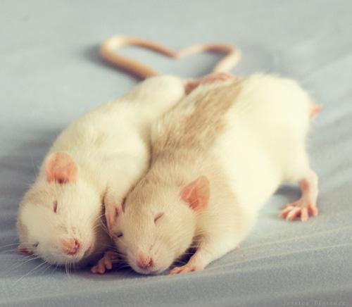 Арты - ассоциации с игрой - Страница 2 Rats_32