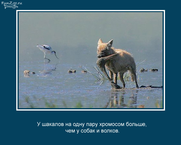 Забавные факты про животных (25 картинок)