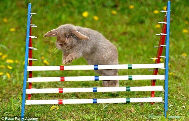 Соревнования кроликов (5 Фото)
