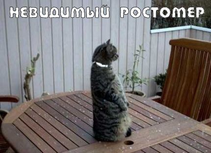 Коты и невидимые предметы (22 фото)