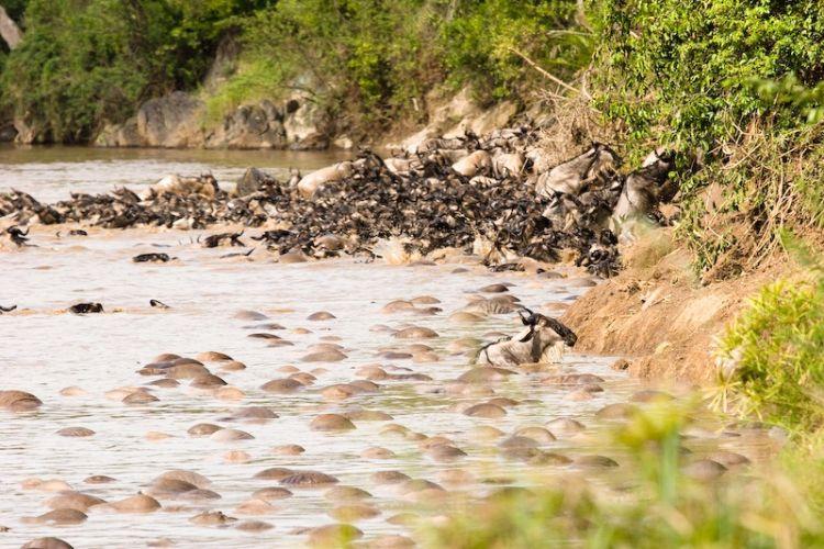 Миграция животных (34 фото)