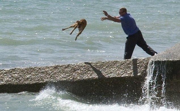 Купание собаки (7 фото)
