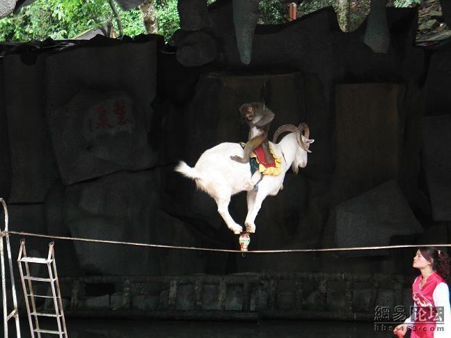Циркачи (6 Фото)