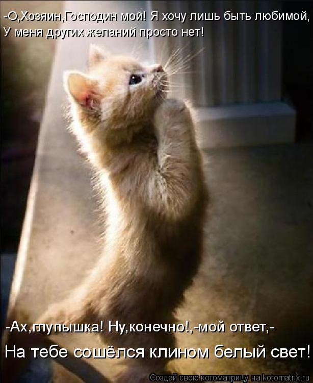 Очередная позитивная подборка котоматриц! (50 штук)