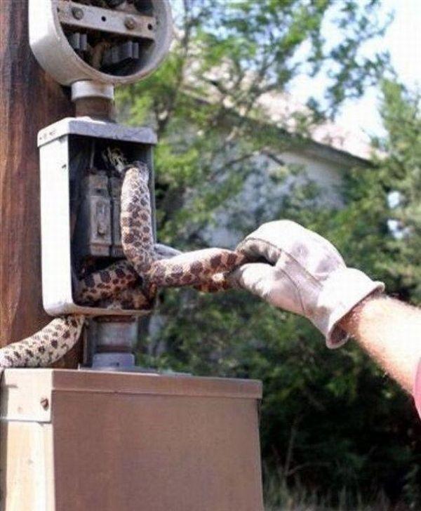 Змея плохо кончила (5 фото)