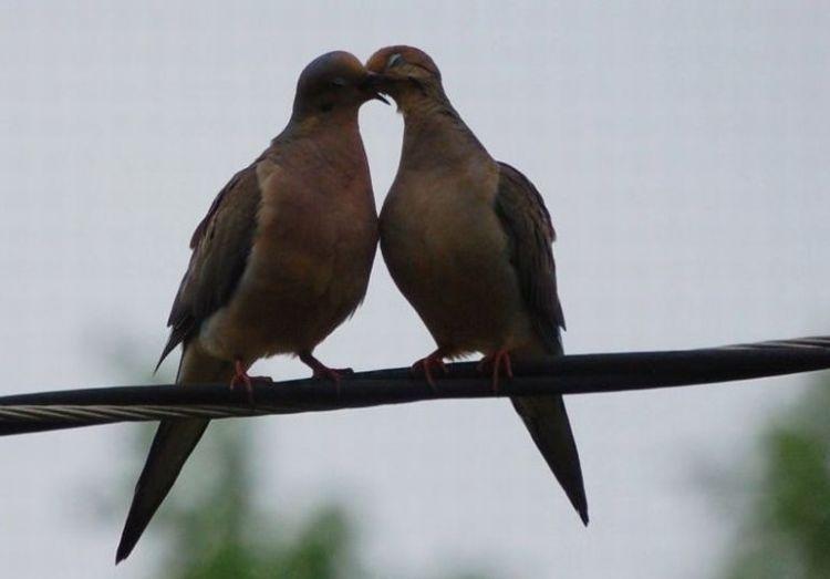 Это любовь (4 Фото)